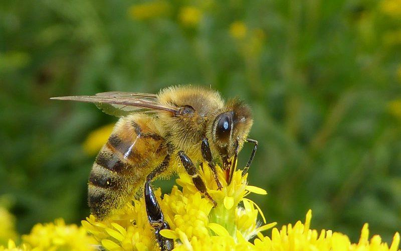 bijen5